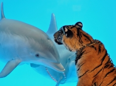 путь дельфина
